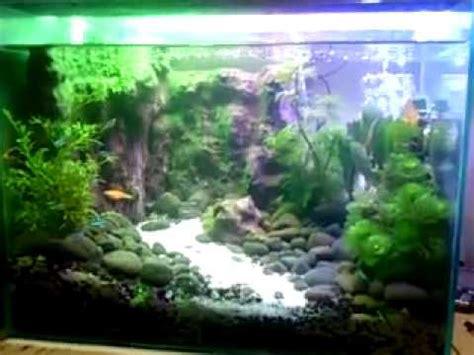 membuat aquascape dinding menanam tumbuhan darat dalam air funnycat tv