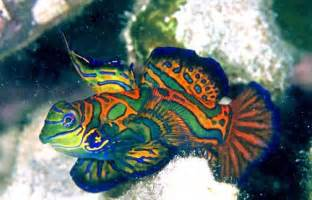 10 Incredibly Beautiful Fishes   Listverse