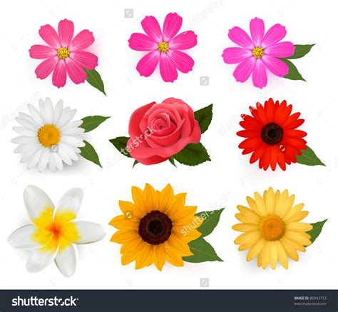 colored beautiful flowers design graphics vector flower beautiful magenta flower clipart clipground