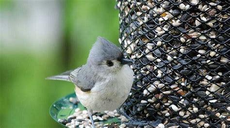 uccelli da giardino aiutiamo gli uccelli selvatici in inverno lezioni di