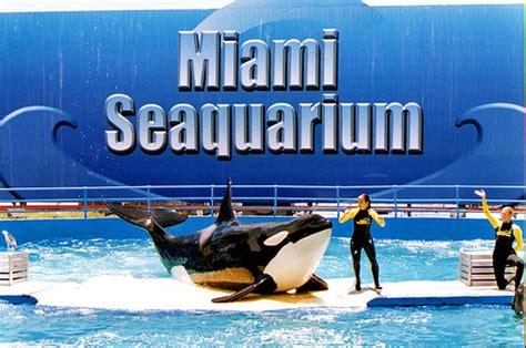 imagenes sitios turisticos miami sitios tur 237 sticos en miami crucero alegre