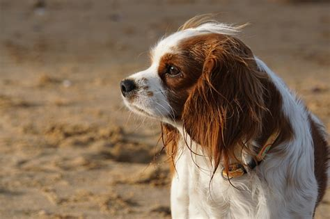 pet insurance  pros  cons