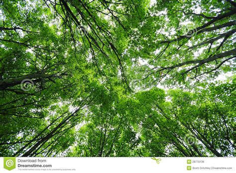 Trees With Canopy Green Trees Canopy Stock Image Image Of Trees Canopy