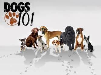 animal planet dogs 101 shih tzu wszystko o psach sezon 1 zwierzbuk pl