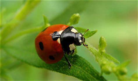 non toxic garden pest garden pest safe non toxic methods