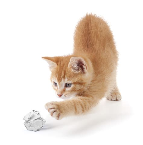 who plays cat 7 ways to entertain your cats without spending money i