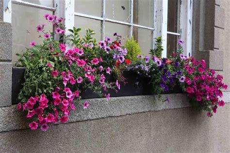 let s bee friendly in wexford wexford in bloom