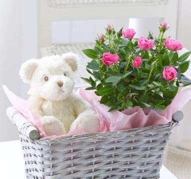 Pot Gantung Mawar 01 tanaman mawar or baby roses jual tanaman
