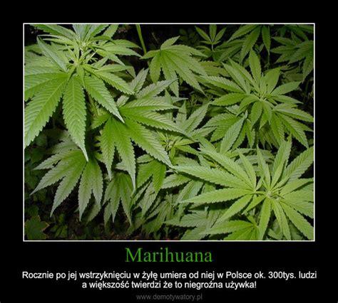 imagenes de weed reales marihuana demotywatory pl