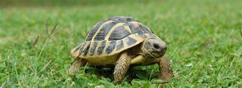 vasca per tartarughe vasca per tartarughe d acqua con come costruire terrario