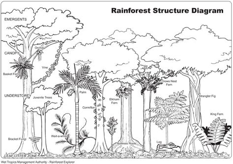 tree diagram coloring page 17 best images about rainforest on pinterest trees