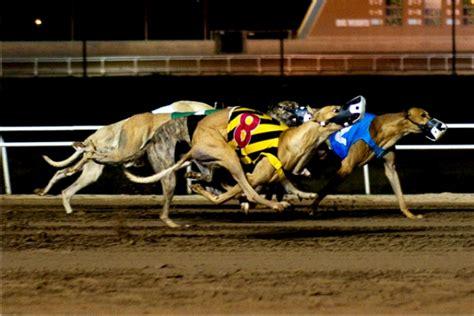 puppy racing racing in vung tau vung tau city portal