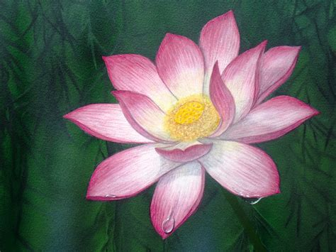 Paintings Of Lotus Flowers Water Paintings And Photos Tracts4free