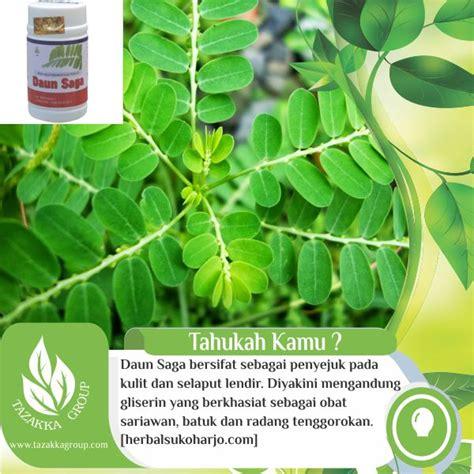 jual obat sariawan  ampuh  herbal daun saga tazakka