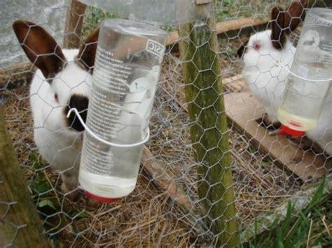 alimentazione conigli da carne allevamento conigli da carne conigli