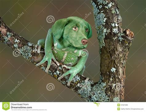 frogs to dogs frog stock photo image 51501065