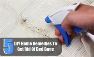 will lysol kill bed bugs how to get rid of bed bugs yourself fast home remedies for