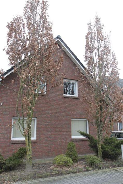 Sichtschutz Balkon Selber Machen 3706 pflanzen f 252 r nordseite pflanzen nordseite haus bestseller