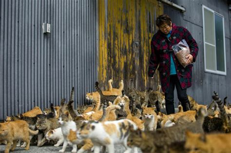 felines rule on ehime s cat island the japan times island in japan swarmed by cats that outnumber humans 6 to