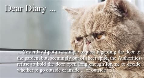and cat diary if your cat kept a diary would he list his grievances against you and humanity