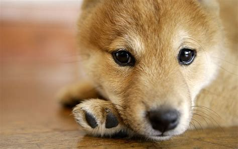 hi puppy widescreen lovely puppy wallpapers 1440x9005 wallcoo net