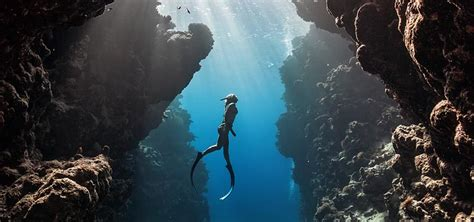 free diving archives porthole dive charters