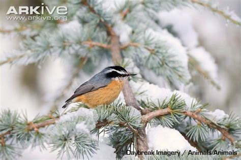 45 best ideas about winter birds of wisconsin on pinterest
