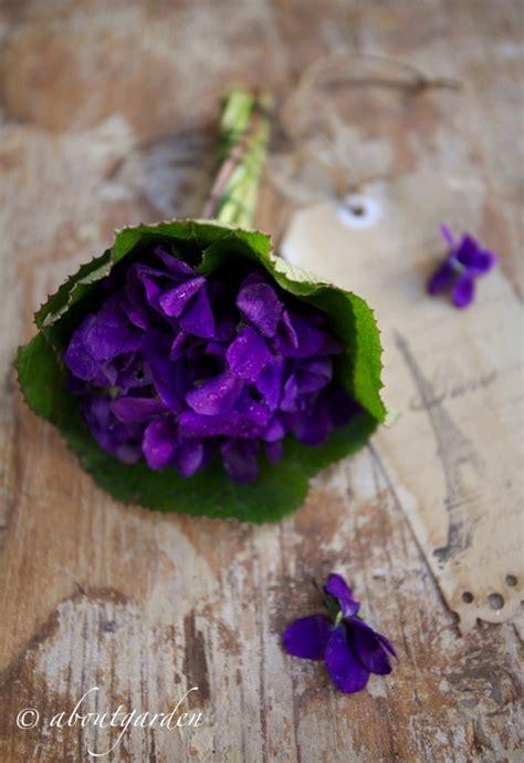 le violette fiori f 234 te de la violette aboutgarden