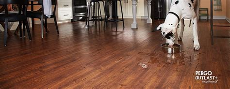 pergo flooring reviews dogs carpet vidalondon