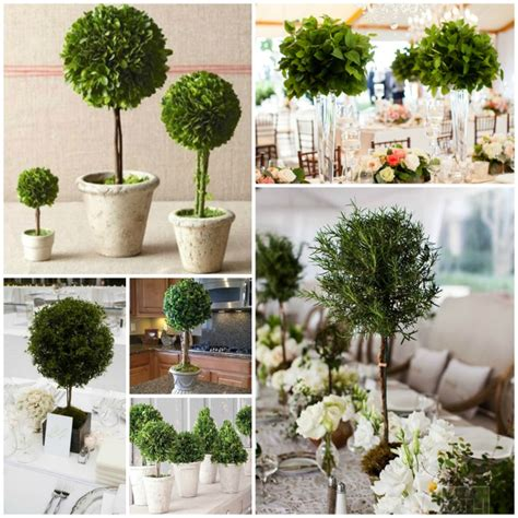 topiary tree centerpieces related keywords suggestions for topiary centerpieces