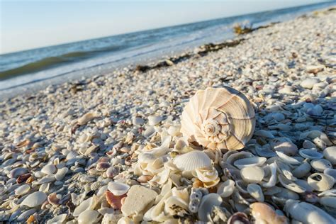 best beaches for seashells 5 best beaches for shelling in america orbitz