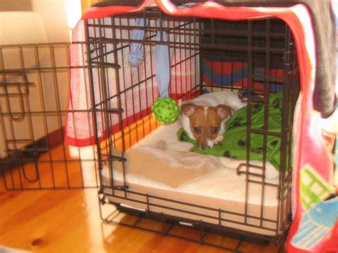 how to make dog crate comfortable canine crate training the balanced canine