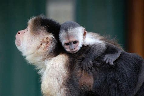 monkey haven newport