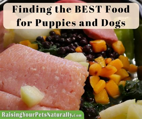 the best food for puppies best food for puppies what is the best food raising your pets naturally