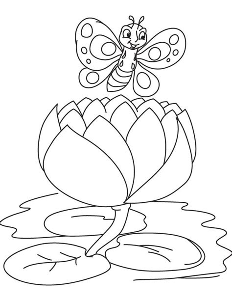 coloring page water lily butterfly on a big water lily coloring page download