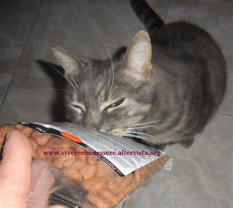 alimenti animali husse alimenti animali