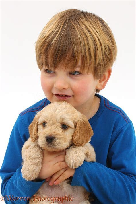 boy puppy boy holding sleepy cockapoo puppy photo wp41549