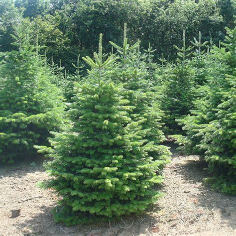 selling trees top selling trees wonderfulinfo