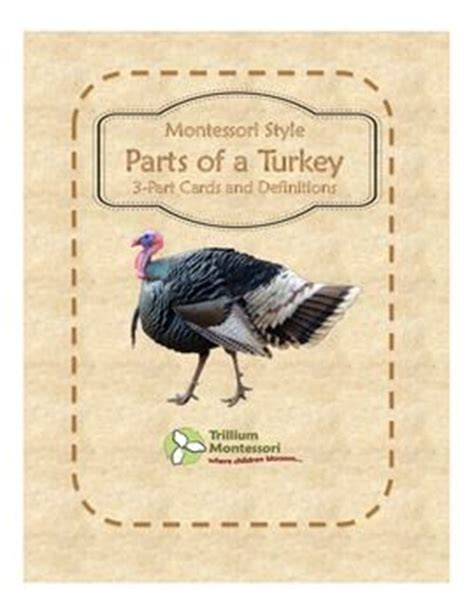 printable turkey parts free parts of a turkey 3 part cards and definitions from