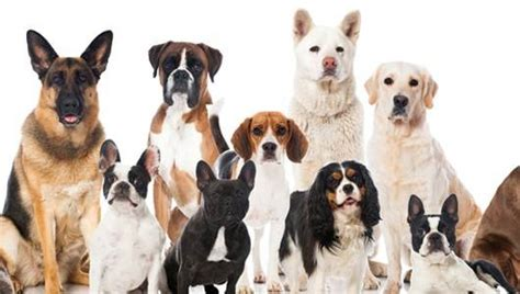 guess the breed can you guess the breed with just 1 hint quiz mnn nature network