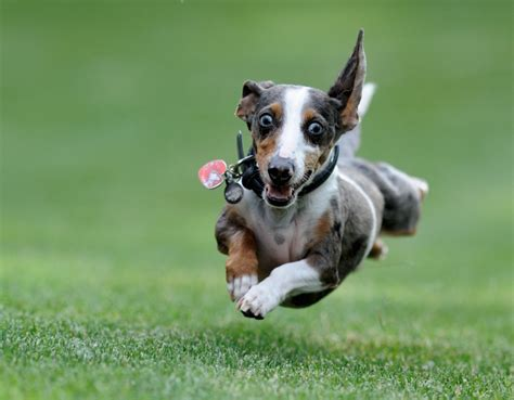 excited puppy excited thedogtrainingsecret