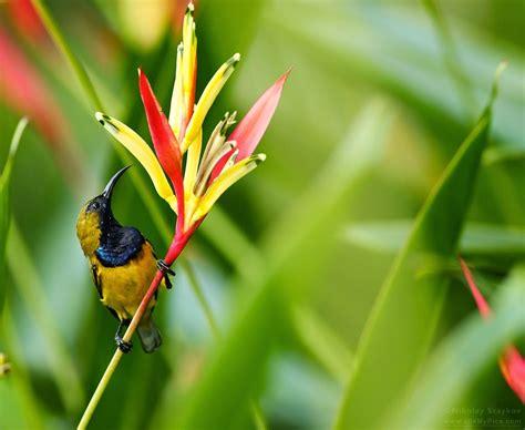 Loyang Silikon Bunga Dan Serangga jenis jenis burung kolibri terpopuler dunia burung