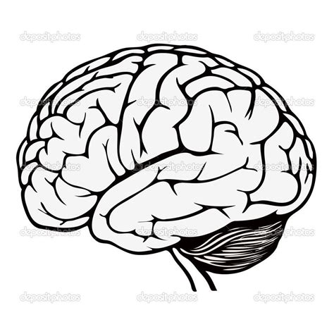 coloring page brain brain parts coloring pictures to pin on pinsdaddy