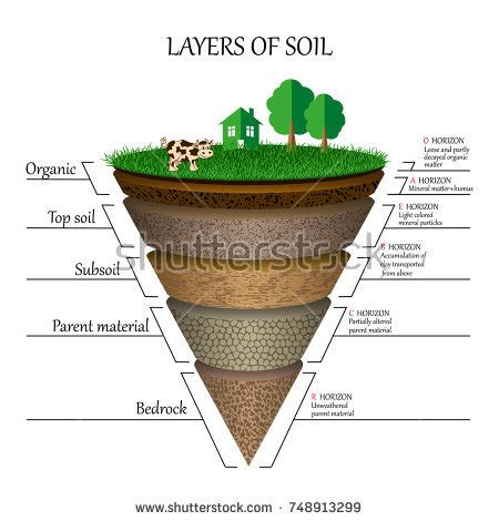 layers of the soil diagram humus stock images royalty free images vectors