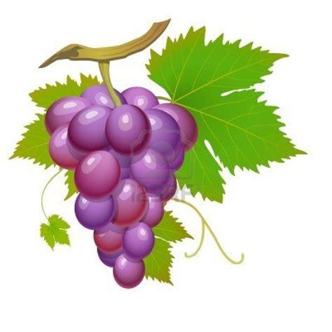 imagenes de uvas sin fondo dessin en couleurs 224 imprimer nature fruits raisin