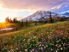 Flowers Poughkeepsie - mount rainier national park over 230 000 acres of natural