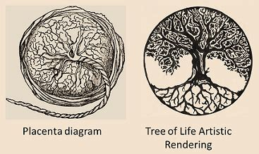 what does the tree symbolize what does the tree of life symbolize tree of life
