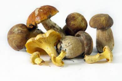Pilze Im Garten Giftig Für Kinder by Gartenpflanzen Beliebte Arten Sowie Tipps Zur Pflege Und