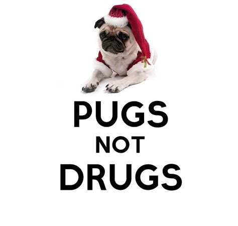 pugs not drugs pugs not drugs painting by celestial images
