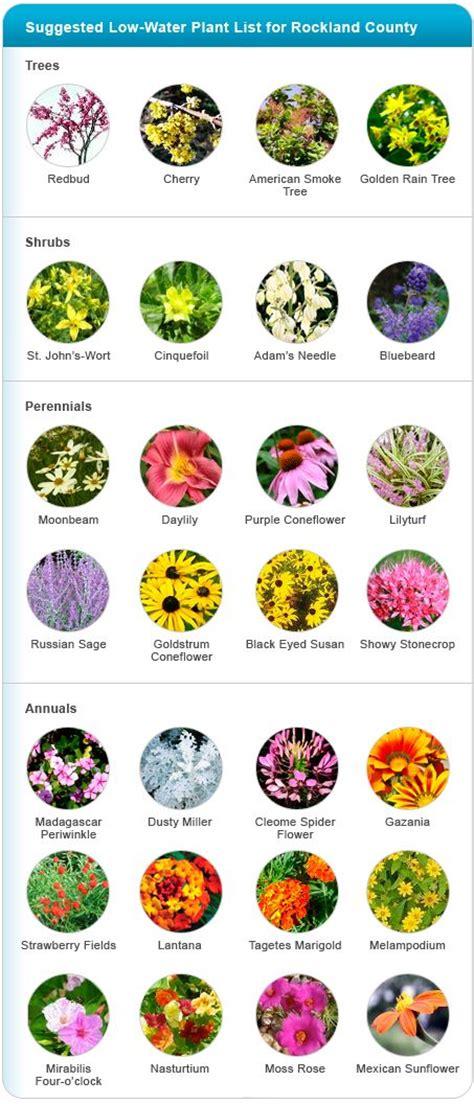drought tolerant plants picmia